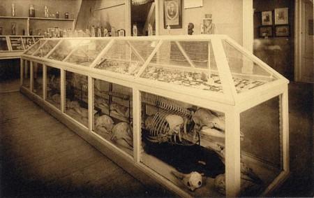 Une vitrine du Musée